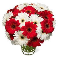 Red White Gerbera in Vase 20 Flowers with Rakhi delivery in India on Rakhi