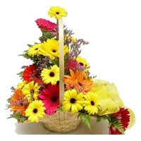 Rakhi Delivery in India with Mixed Gerbera Basket 12 Flowers