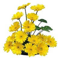 Yellow Gerbera Basket Flowers with Rakhi Delivery in India