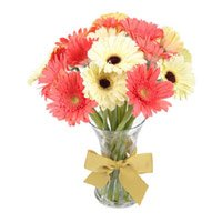 Send Online Order for Rakhi with Mix Gerbera in Vase 15 Flowers in India