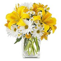 Rakhi Gift Delivery in India 3 Yellow Lily 9 White Gerbera in Vase with Rakhi