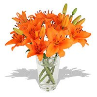 Send Orange Lily in Vase 5 Flower Stems with 2 Free Rakhi in India