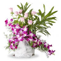 Buy Rakhi and Orchids and Roses Arrangement 16 Flowers in India