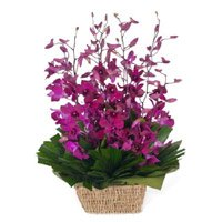Online Delivery of Rakhi with Purple Orchids Flower Basket in India