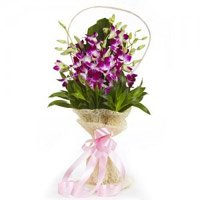 Rakhi with Purple Orchid Flowers Delivery in India