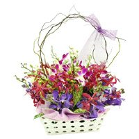 Same Day Mixed Orchid Basket 12 Flowers Stem with Rakhi Delivery in India